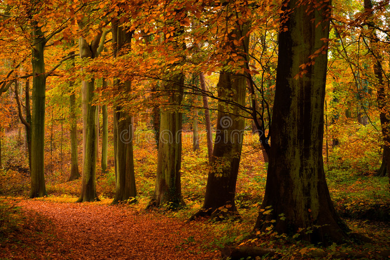 Autumn colors. In the forest royalty free stock image
