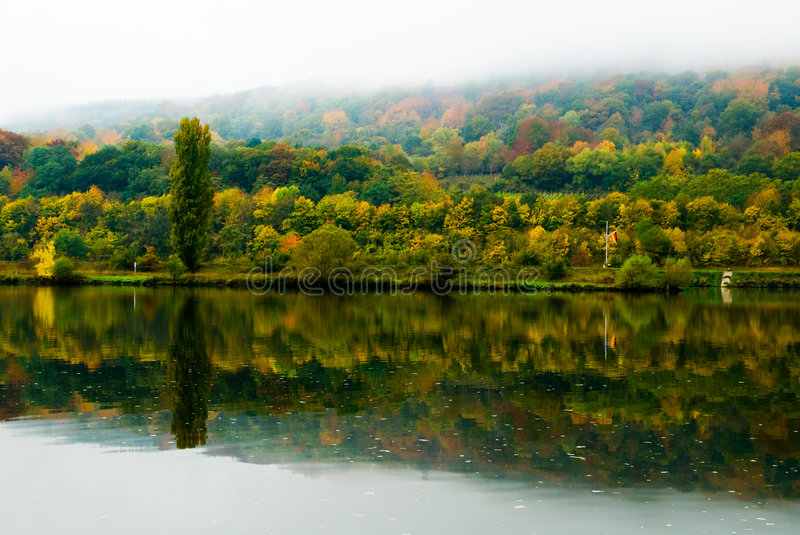 Autumn colors. At the mosel river in germany royalty free stock images
