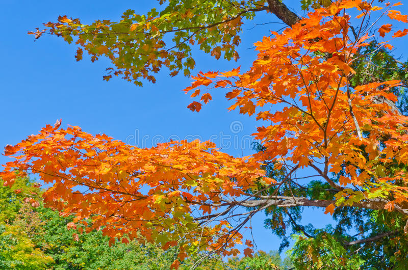 Autumn Colors imagen de archivo libre de regalías