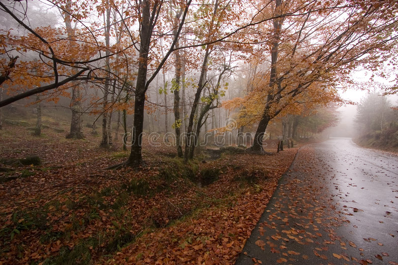 Download Autumn colors stock image. Image of road, park, color - 7434725