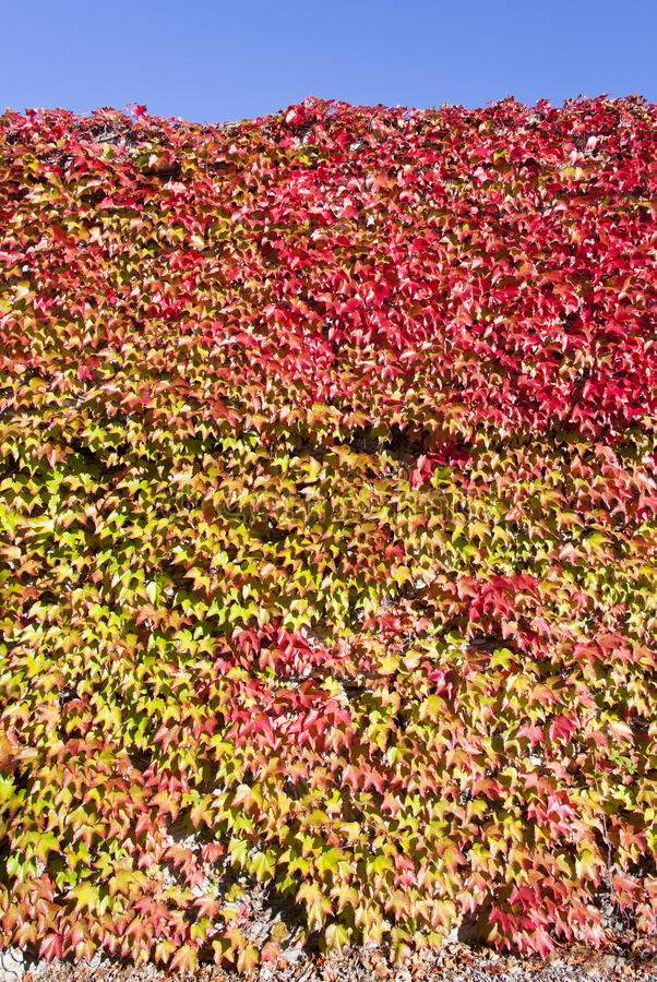 Autumn Colors imagem de stock royalty free