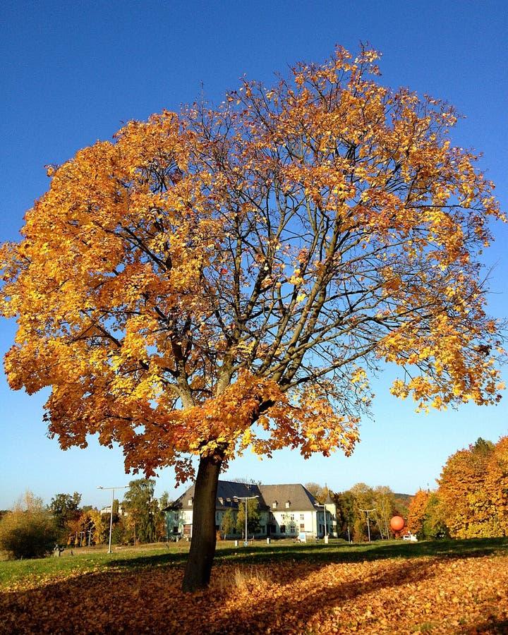 Autumn Colors royalty-vrije stock afbeeldingen