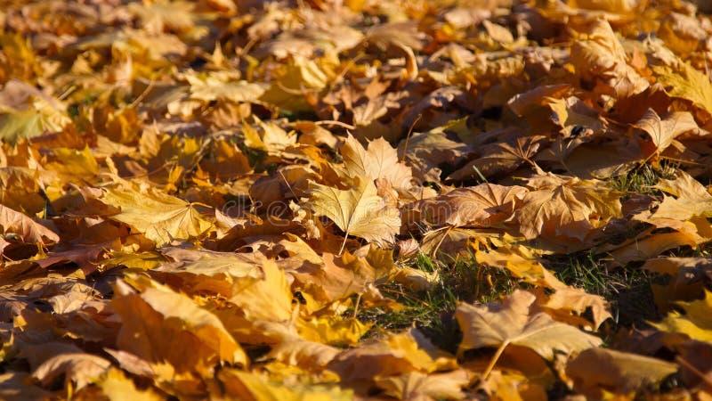 Autumn Colors stock afbeeldingen