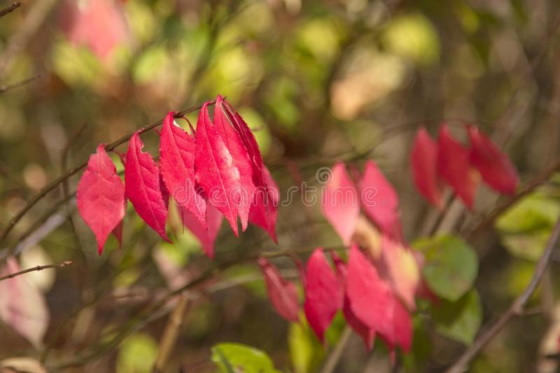 Autumn Colors royalty-vrije stock foto