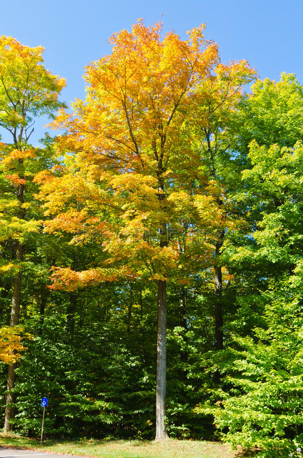 Autumn Colors imágenes de archivo libres de regalías