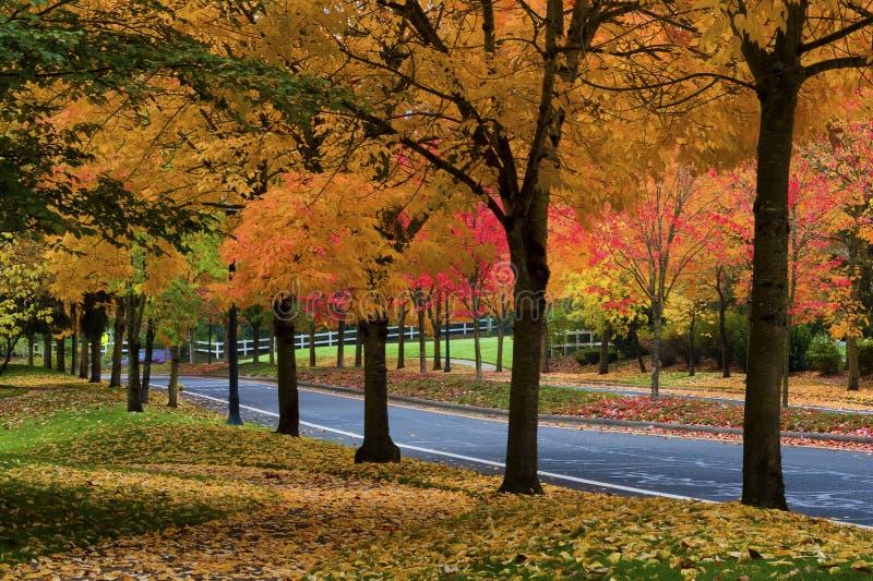 Autumn Colors adorna los árboles a lo largo de una calle foto de archivo
