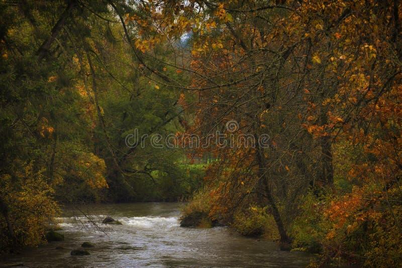 Autumn Colors Along la rivière image libre de droits