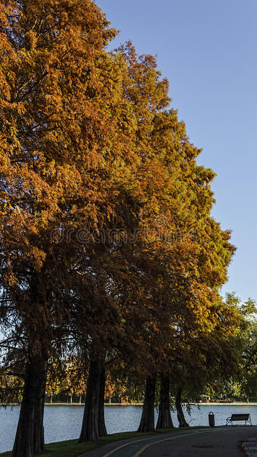 Autumn colors. Another shot and beautiful trees in the park at Lake Titan, Bucharest royalty free stock photos
