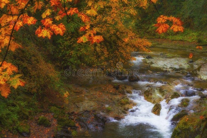 Autumn Colors auf McKenzie-Durchlauf--Santiamdurchlauf-szenischem Seitenweg lizenzfreies stockfoto