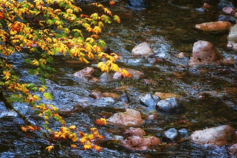 Autumn Colors auf McKenzie-Durchlauf--Santiamdurchlauf-szenischem Seitenweg stockfoto