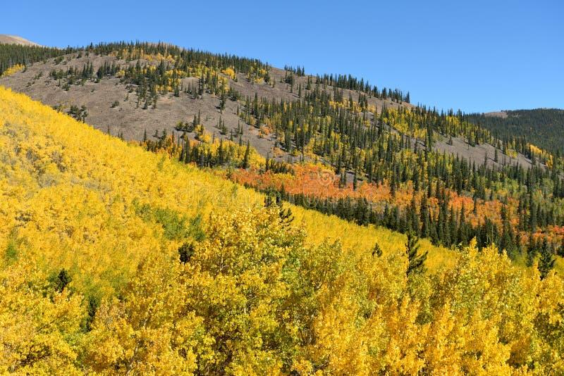 Autumn Colors av Colorado Rockies arkivbild