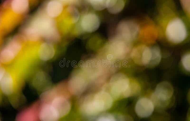 Autumn colors bokeh royalty free stock photos