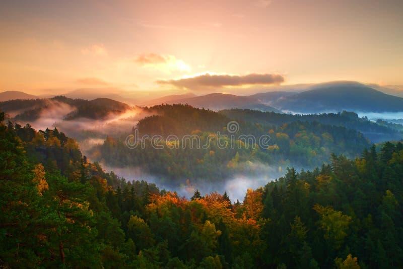 Autumn Colors Bosque brumoso del pino en la cuesta de montaña en una reserva de naturaleza imágenes de archivo libres de regalías