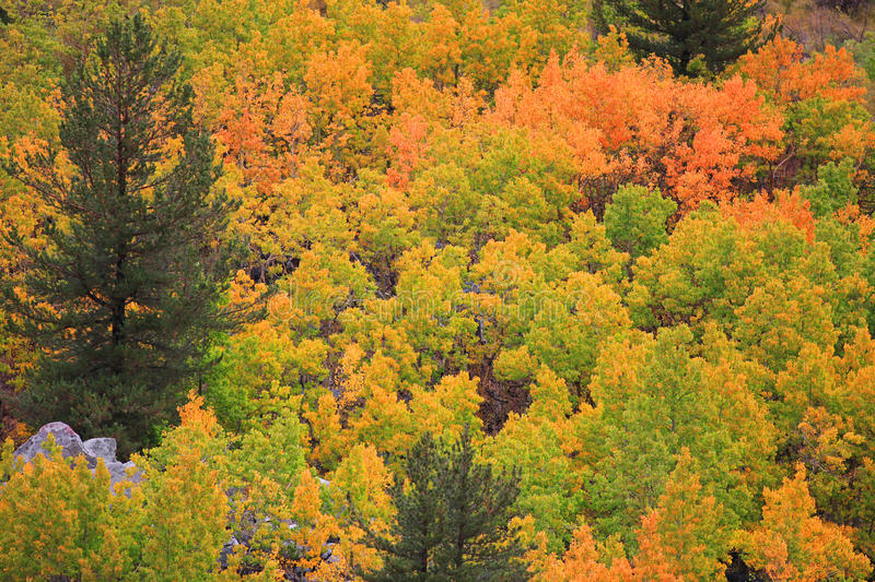 Autumn colors. Bright colorful trees in autumn time royalty free stock photo