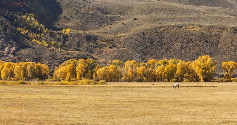 Autumn Colors in Colorado stock photos