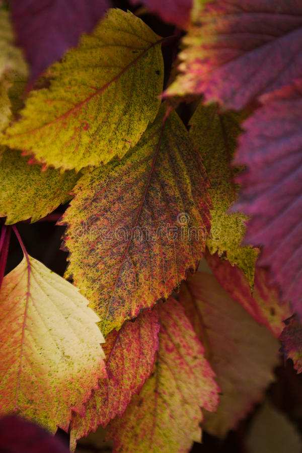 Autumn colors! royalty free stock image