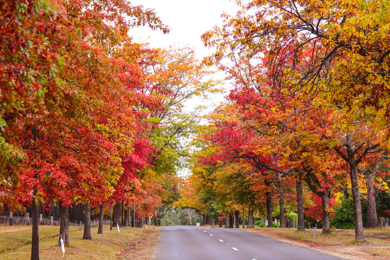 Autumn colors in countryside stock photos