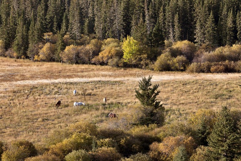 Autumn Colors Cypress Hills Canada royalty free stock image