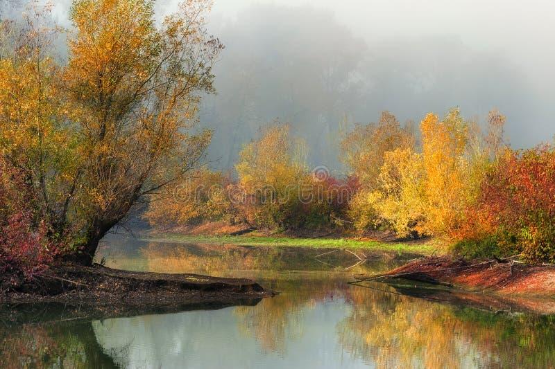 Autumn Colors et le brouillard augmentent la forêt et l'étang photos libres de droits
