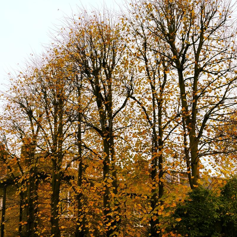 Autumn colors. Fall time, varied colors, time to heal royalty free stock photo