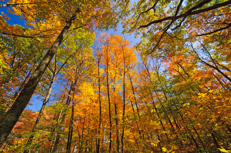 Download Autumn Colors In The Forest Stock Photo - Image of dramatic, scenic: 27176240