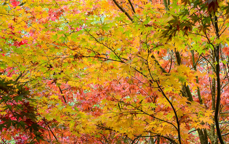Autumn. Colors in full bloom stock photography