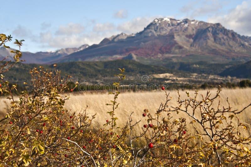 Autumn Colors in Gr Boliche, Bariloche, Argentinië royalty-vrije stock foto's