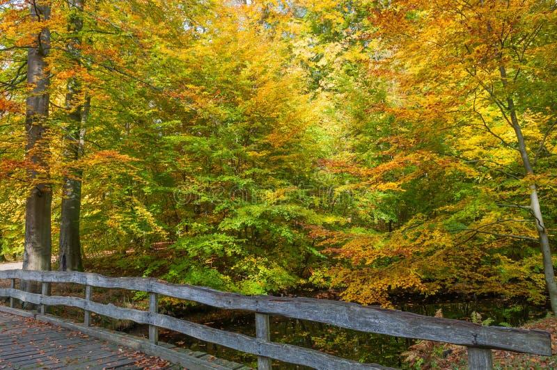 Autumn Colors i dansk skog royaltyfria bilder