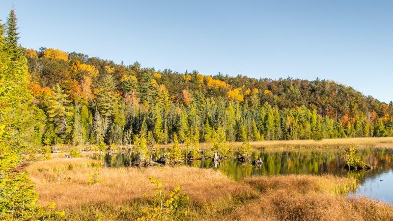 Autumn Colors, Iargo-Frühlinge, szenischer Seitenweg AuSable, MI lizenzfreies stockbild