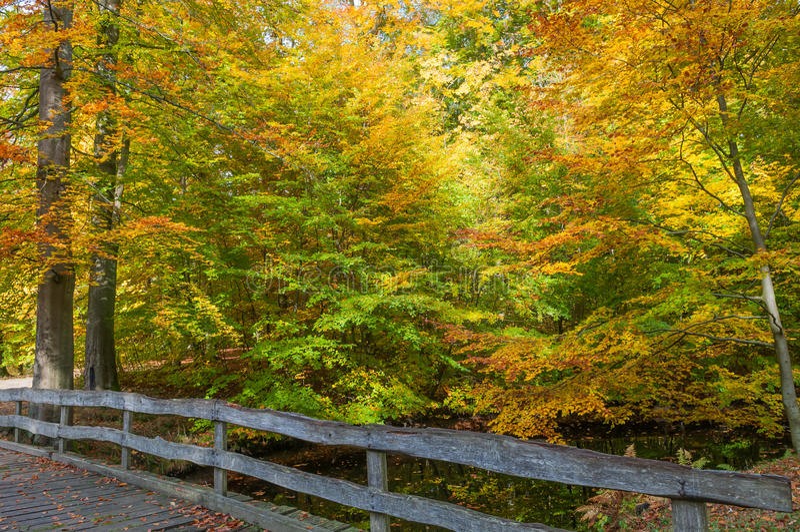 Autumn Colors im dänischen Wald lizenzfreie stockbilder