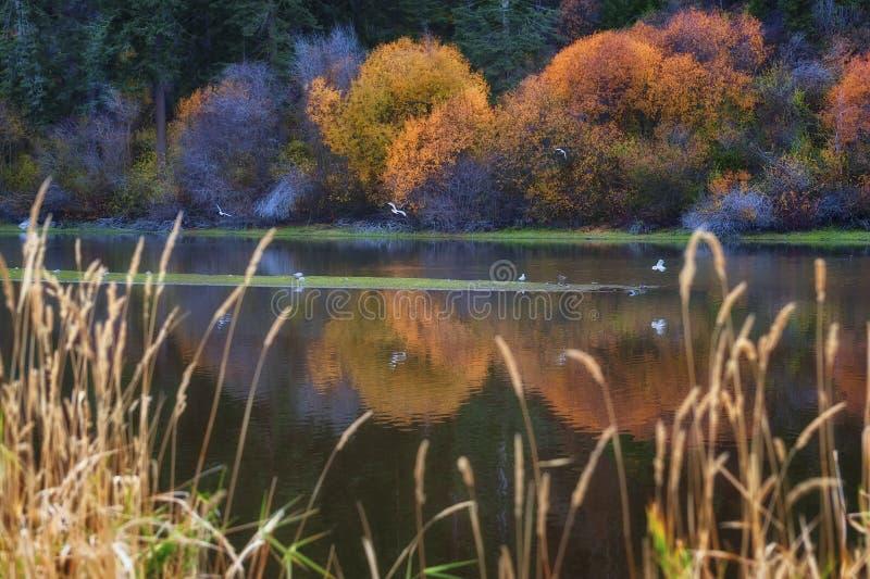 Autumn Colors langs het Meer van Klamath stock afbeelding