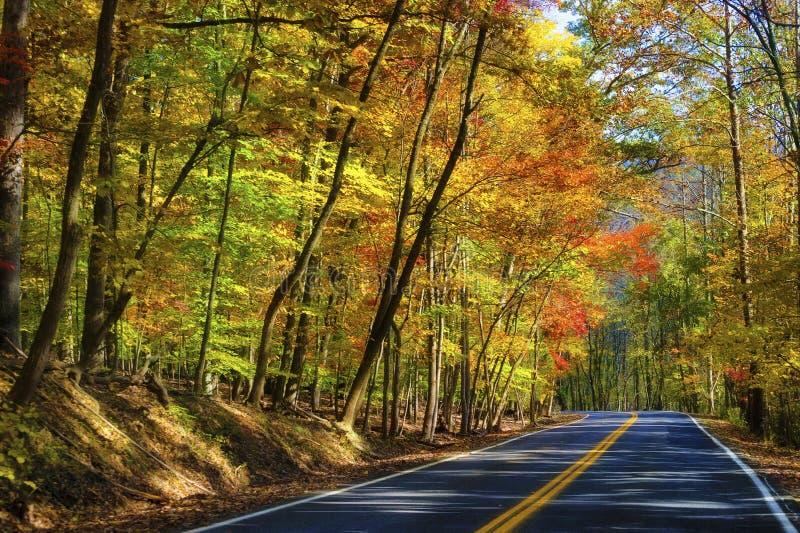 Autumn Colors le long d'une route photos libres de droits