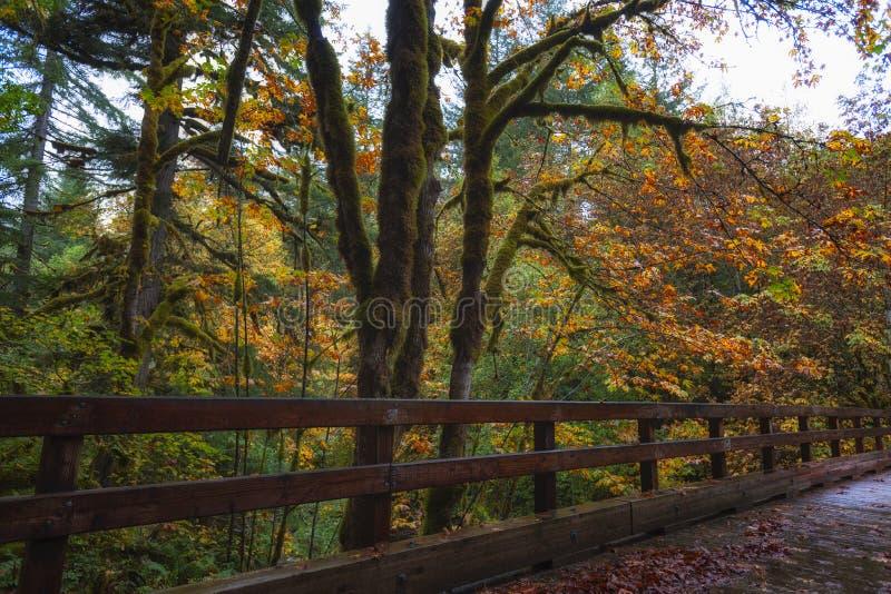 Autumn Colors le long de passerelle images libres de droits