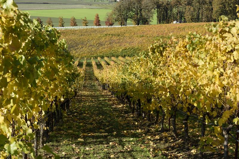 Sunny Fall Afternoon in Oregon Wine Country stock image