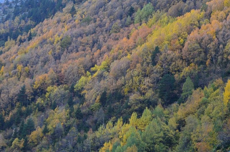 Autumn colors in the mixed forests of Posets-Maladeta Natural Park, Spanish Pyrenees royalty free stock photography