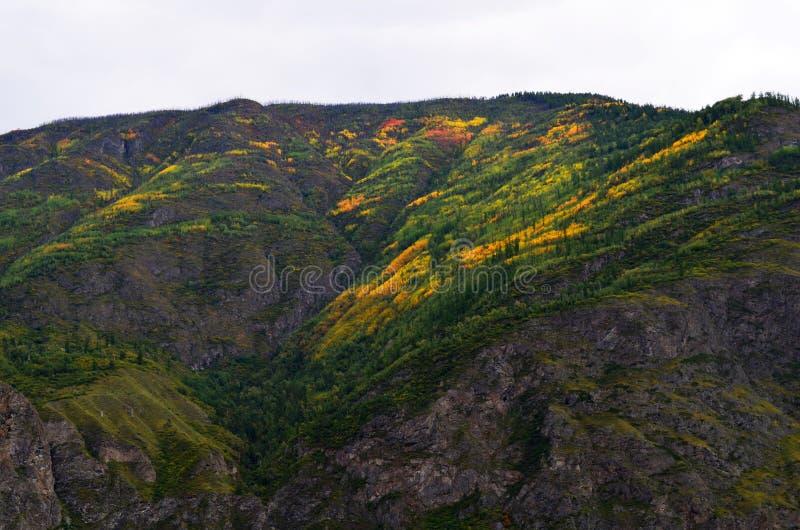 Autumn colors on the mountain slopes. mountain Altai royalty free stock image