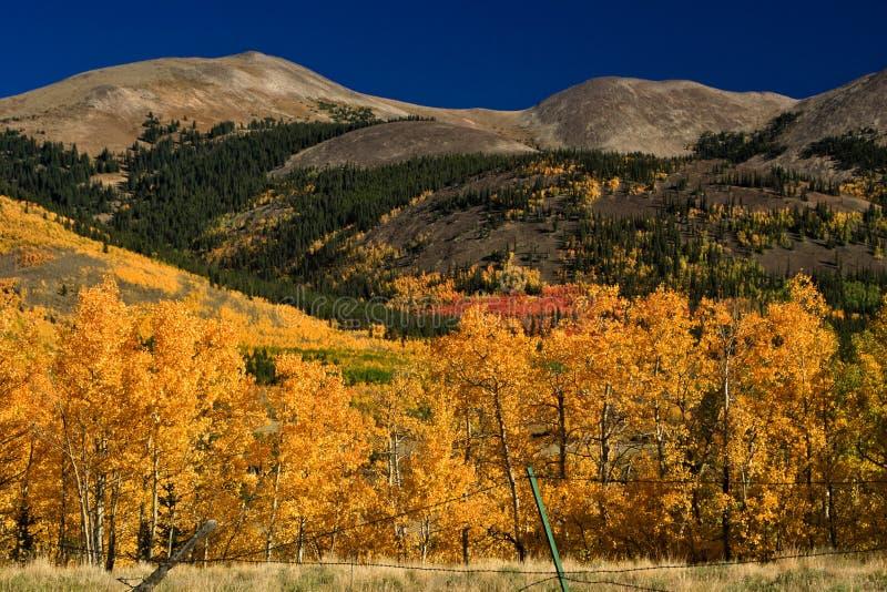 Autumn Colors nelle montagne di Colorado fotografie stock libere da diritti