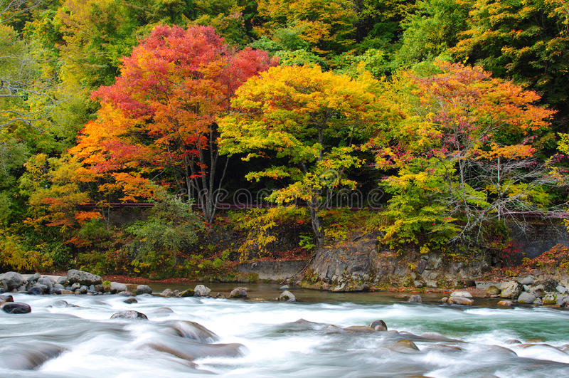 Download Autumn Colors Of Oirase River Stock Image - Image: 17083205