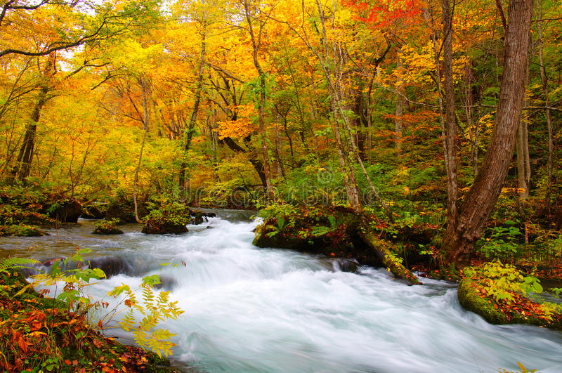 Download Autumn Colors Of Oirase River Stock Image - Image: 17083271