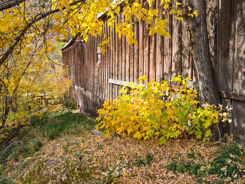 Autumn colors and old barn stock image