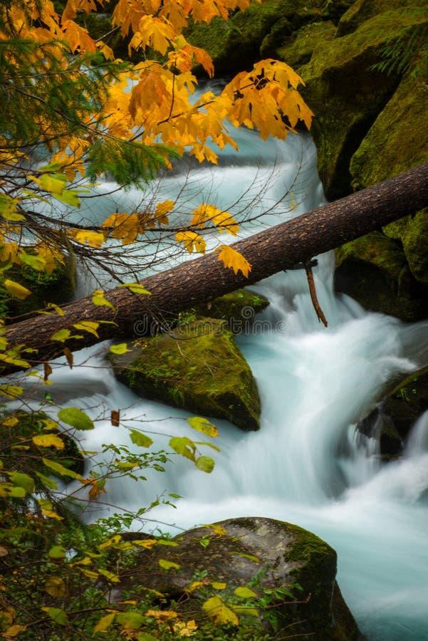 Autumn Colors Oregon Landscape Toketee faller Douglas County Oreg arkivfoto