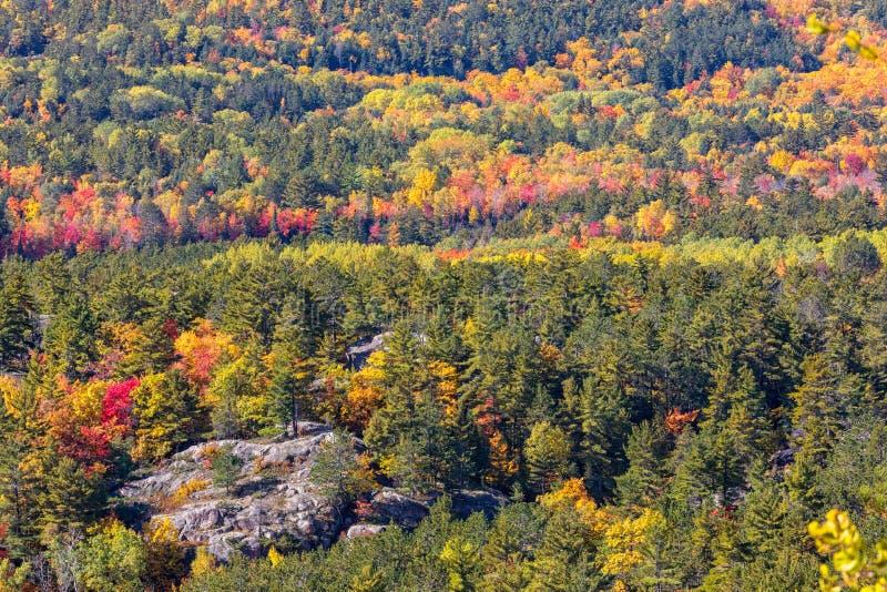 Autumn Colors på det Sugarloaf berget i nordliga Michigan, USA royaltyfria bilder