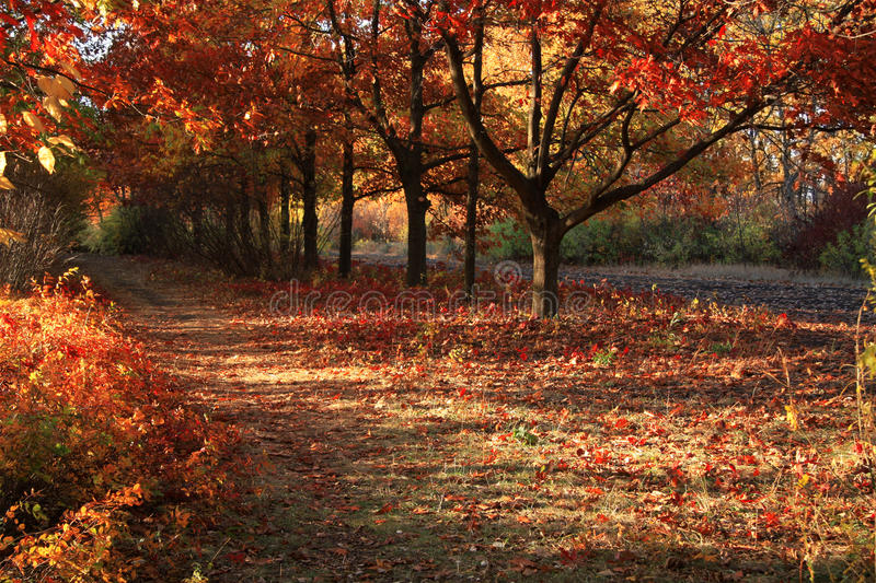 Download Autumn colors in the park stock image. Image of season - 12075823