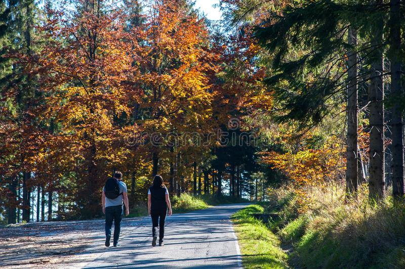 Autumn colors a park full of autumn colors, a mountain trip between beautiful colorful trees in the autumn sun. Autumn colors / a park full of autumn colors, a stock photography