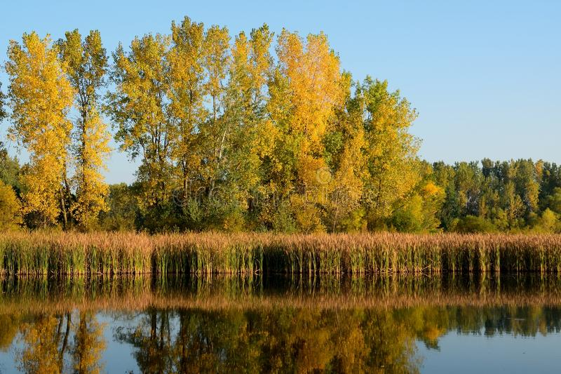 Autumn Colors Reflected su un lago fotografie stock