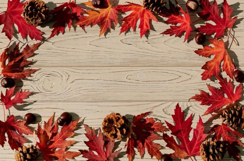 Autumn Colors Rode esdoornbladeren op grijze houten achtergrond selec royalty-vrije stock foto