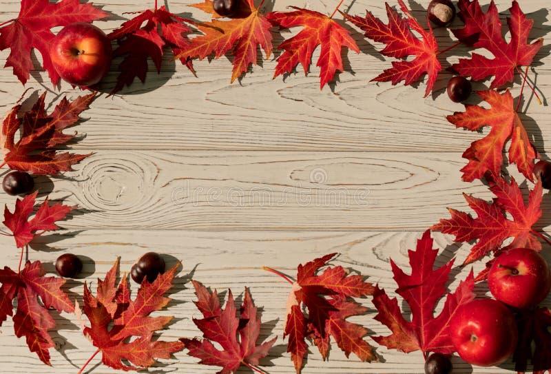 Autumn Colors Rode esdoornbladeren op grijze houten achtergrond selec royalty-vrije stock afbeeldingen