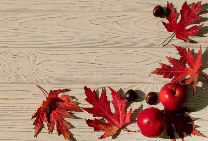 Autumn Colors Rode esdoornbladeren op grijze houten achtergrond selec stock foto's