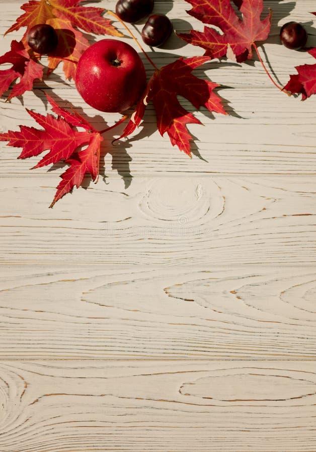 Autumn Colors Rode esdoornbladeren op grijze houten achtergrond selec stock foto