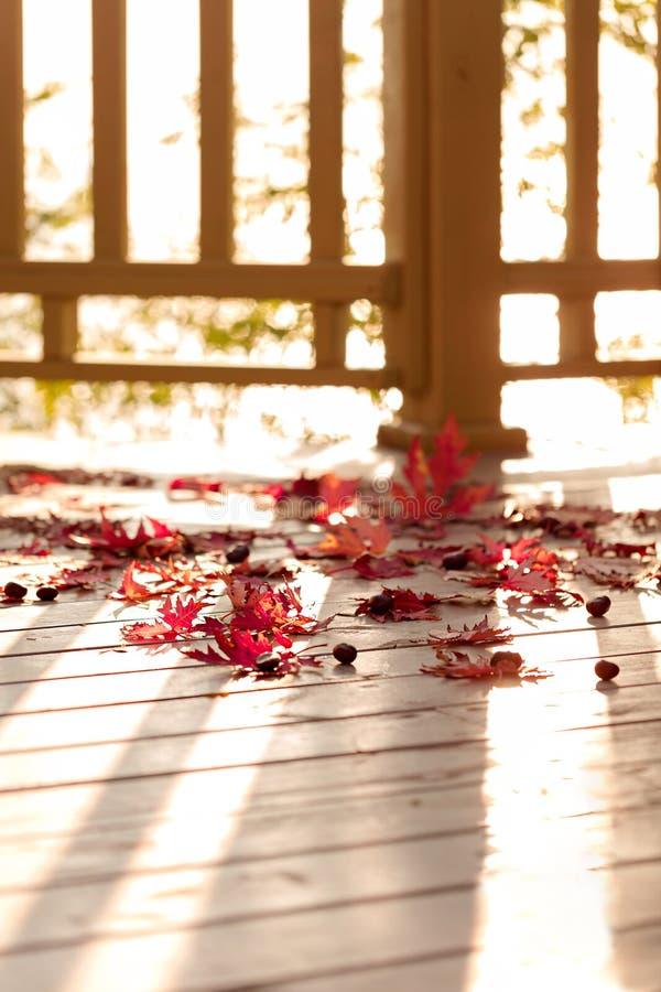 Autumn Colors Rode esdoornbladeren op grijze houten achtergrond selec stock fotografie